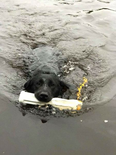 Airflow Bumper - Water Retrieve