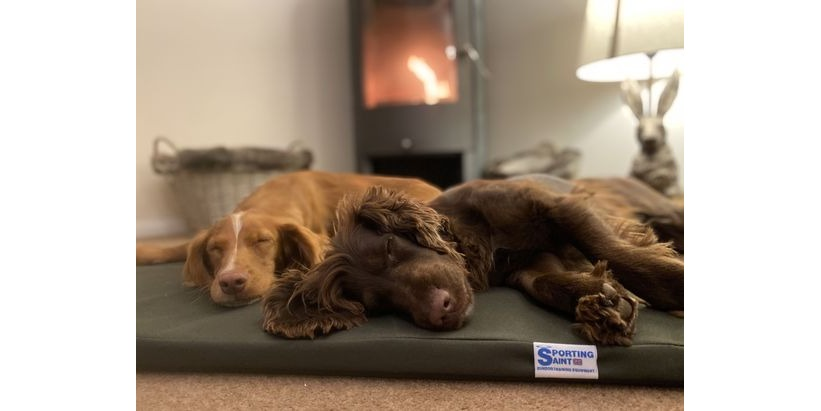 NEW - The Meadow Dog Bed by Sporting Saint