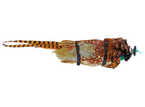 NEW ! PHEASANT PELT Dummies NOW IN STOCK!