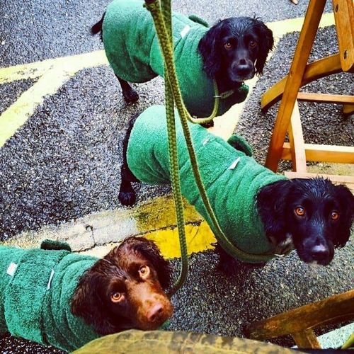 Sporting Saint Dog Towelling Coats image #2