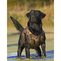 Gundog Neoprene Training Vest