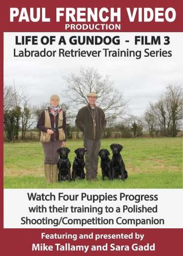 Life of a Gundog - Film 3 - Labrador Retriever Training Series image #1