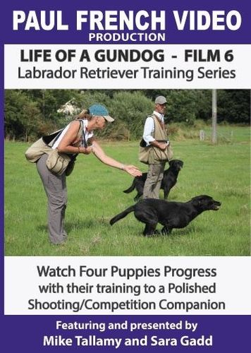 Life of a Gundog - Film 6 - Labrador Retriever Training Series  image #1