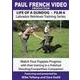 Life of a Gundog - Film 6 - Labrador Retriever Training Series