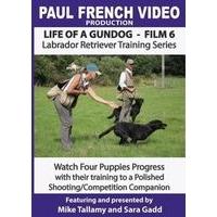 Life of a Gundog - Film 6 - Labrador Retriever Training Series