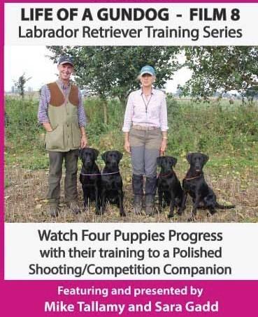 Life of a Gundog - Film 8 - Labrador Retriever Training Series  image #1