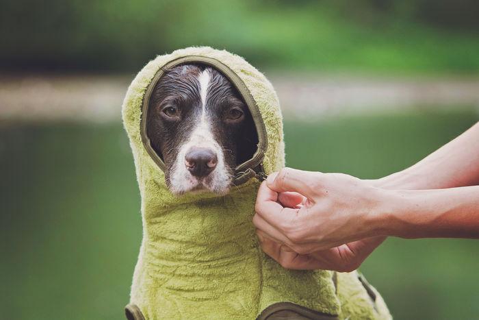 SICCARO Supreme Pro Dog Drying Robe - Olive image #6