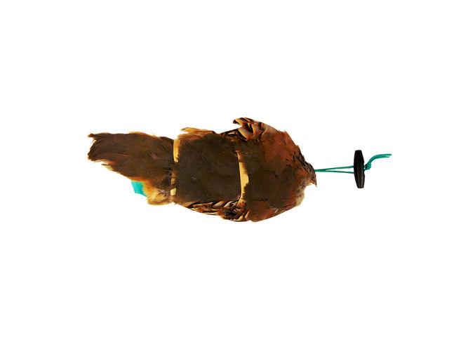 French Partridge Pelt Dummy  image #3