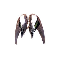 New! Game Bird Wings