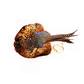 Cock Pheasant Pelt Dummy image #1